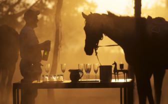Bar and horse at Ride Makgadikgadi Pans, luxury camp in Botswana