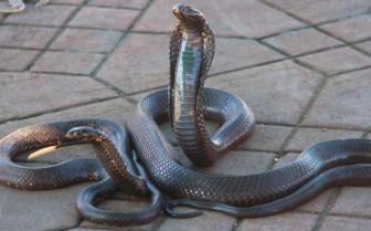 Snakes in Marrakech