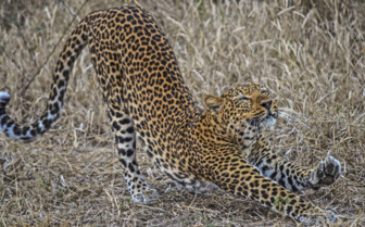 South Luangwa wildlife
