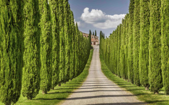 A passageway of tall trees