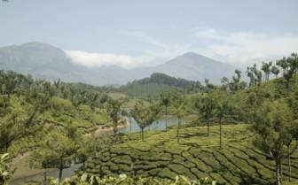Hills crop view