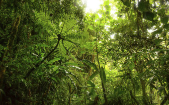 The Lush Rainforest of Belize