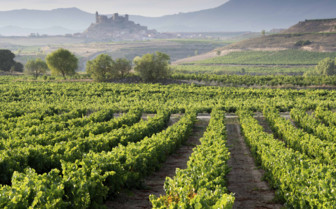 Exploring the Vineyards of Rioja on a Luxury Holiday