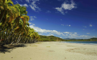 Coastline of Palm Trees