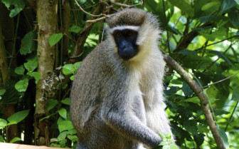 A Monkey in a National Park