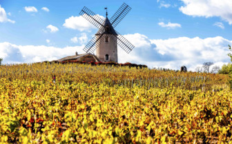 Windmill amidst yellow fields
