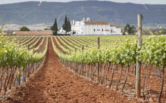 Vineyards in Porto