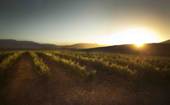 Vineyards as the sun rises