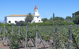 Vineyard in the Maipo Valley