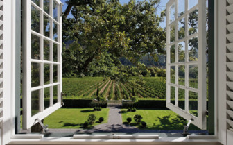 View of Vineyards from the Window