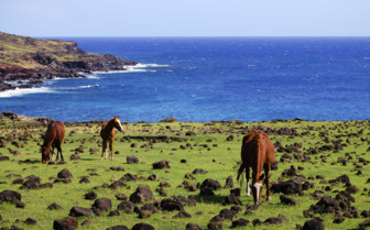 Horses Grazing Amidst the Rocks