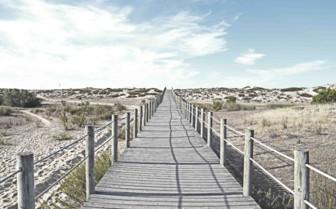 Boardwalk Walkway