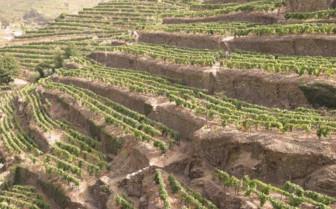 Hills of Vines