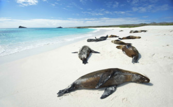 Seals Soaking up the Sun