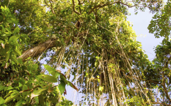 The Rainforest Canopy