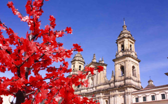 Bogota Cathedral and Pink Flowers