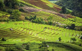 Pa Pong Pieng Rice Terraces