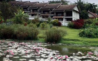 Lake with lillipads