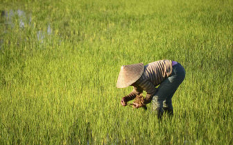 Paddy Field Picker