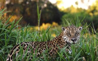 Wildlife in the Pantanal