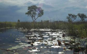 Swamp in Okavango Delta