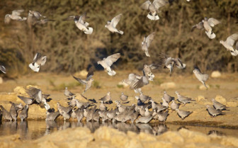 Birds flying in Kalahari