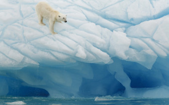 A Polar Bear Testing the Ice