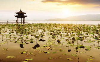 Lotus Flowers Across West Lake