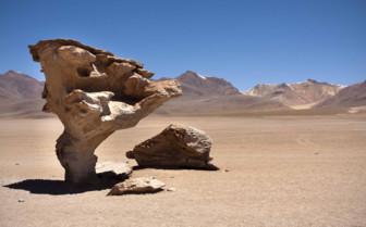 Rock Tree in the Desert
