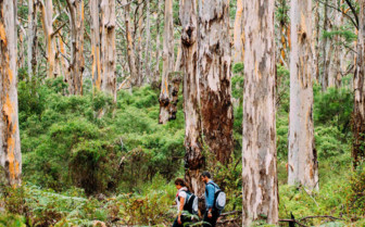 Couple in a Forest on a Margaret River Walk