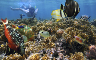 Snorkelling and exploring the marine life in the Pacific Ocean