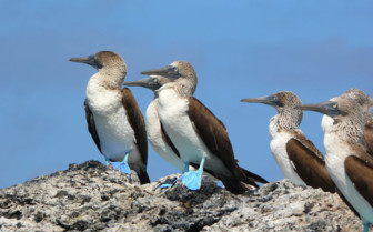 Birds in Galapagos Archipelago