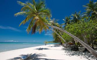 The white sandy beaches and palm trees of Rangiroa