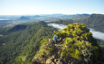 Queensland Scenic Rim Bush walk