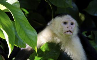 Monkey in the rainforest