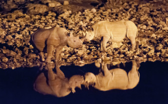 Rhinos wrestling by an African watering hole
