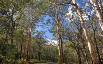 Karri, West Australia