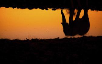 Elephant reflection