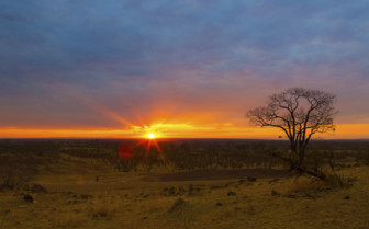 Luangwa sunset and tree