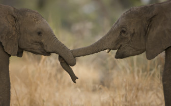 Elephant friends in Zambia
