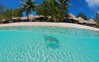Turtle sanctuary Le Meridien