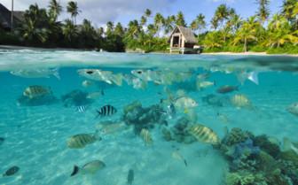 Bora Bora lagoon fish