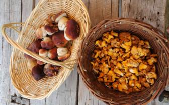 Summer foraging for mushrooms