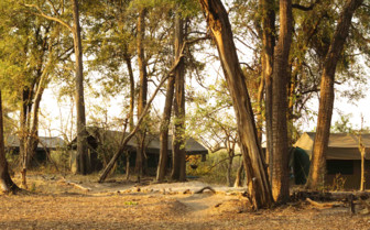 Guest tents exterior and trees