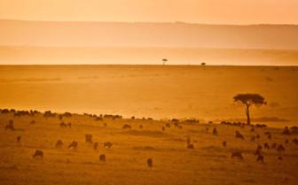 Maasai Mara overview