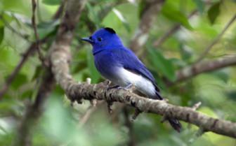 Birding in Yala
