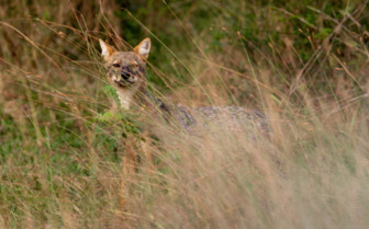 Wildlife of Yala National Park