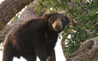 Wildlife, Yala National Park