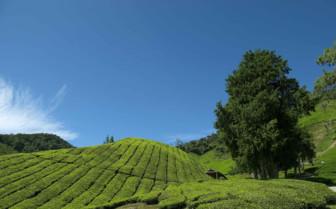 Scenery in Malaysia