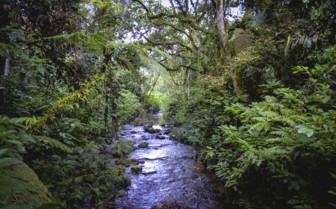 Bwindi Park river